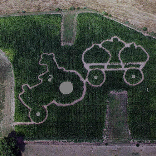 Explore our giant corn maze and other fall fun on the farm!