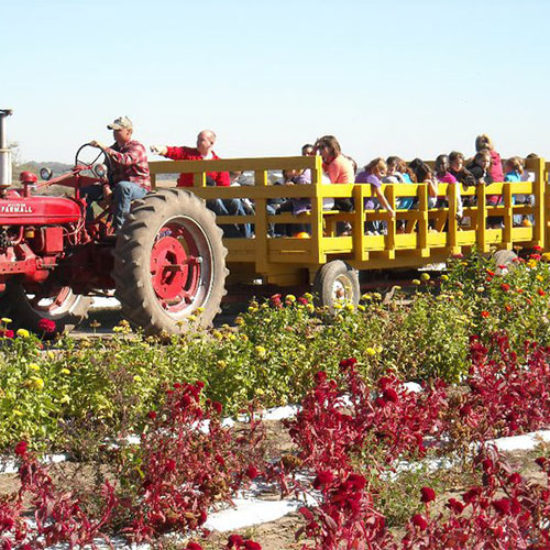 Scenic fall hayrides at Howell's Pumpkin Patch