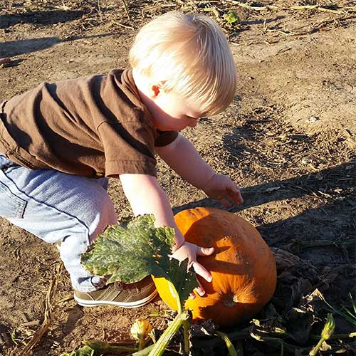 Pick Your Own Pumpkins at our U-Pick Pumpkin Patch at Howell's Pumpkin Patch