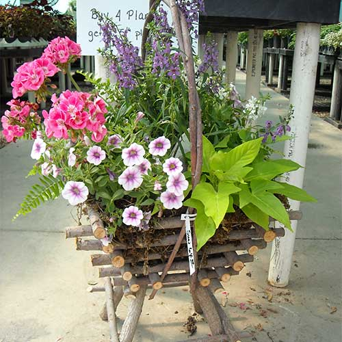 Add floral beauty to your patio or porch with our succulents, container gardners, and custom hanging baskets!