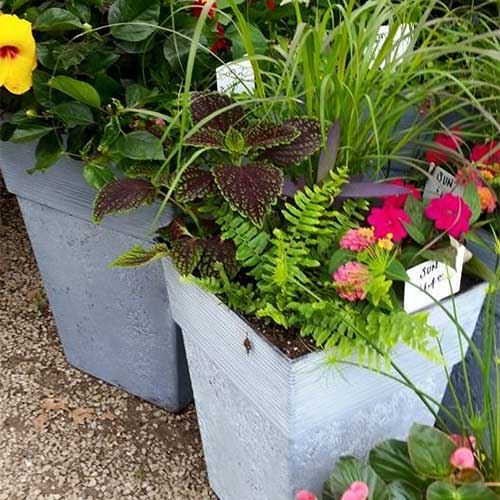 Our hanging baskets are custom designed with beautiful annuals.