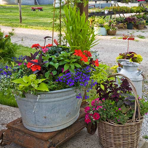 Add some elegance to your space with our custom designed container gardens!