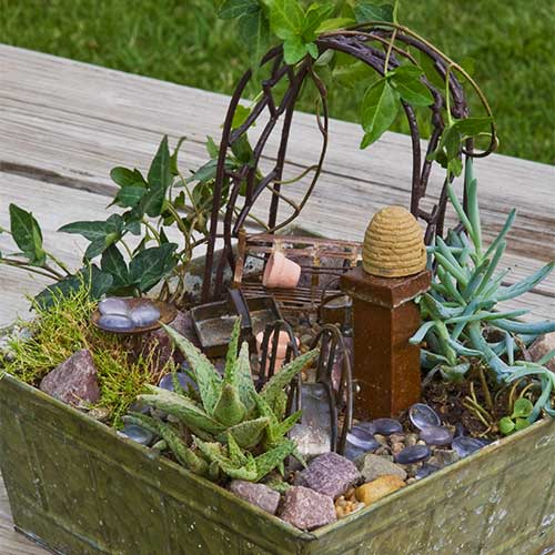 Add some whimsy to your fairy garden with our Itty Bitties and air plants